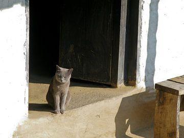 Kat in deuropening van Floris den Ouden