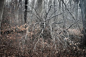 Dood in het bos van Rudolf Pelzl