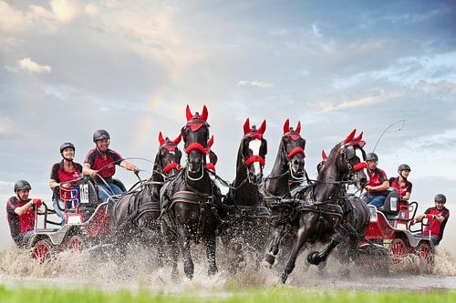 Paarden menwedstrijd van