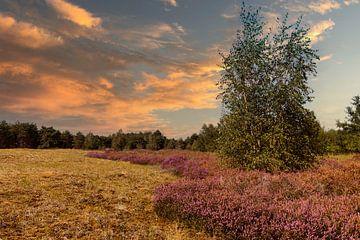 de velden van maasduinen tegen zonsondergang van Compuinfoto .