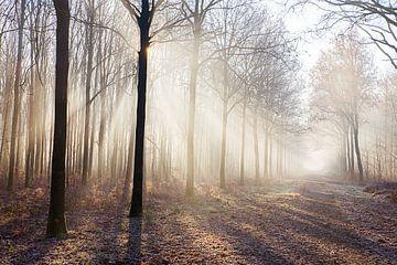 Nebel im Wald von
