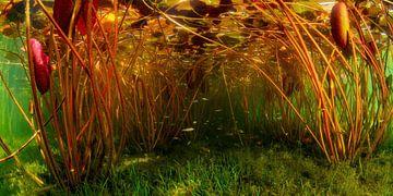 Het leven onder de waterlelies van Filip Staes