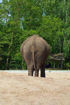 olifant met camera vrees van tiny brok