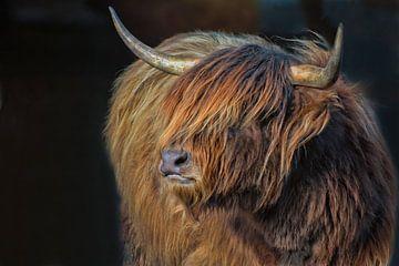 schottische Highlanderin II von Joachim G. Pinkawa