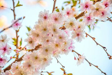 Spring van Richard Marks