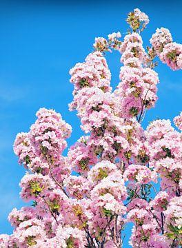 Blühender Baum von BVpix