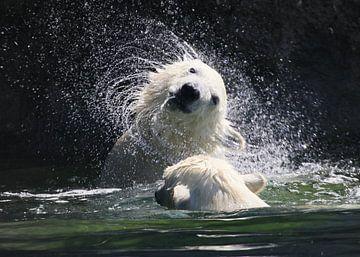 IJsbeer Water Festijn van