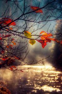 Autumn Gold van
