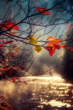 Autumn Gold van Dirk Wüstenhagen