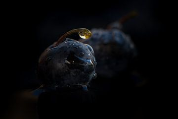 Blauwe bes met waterdruppels van Jenco van Zalk