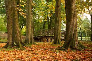 Kastanjebomen laten als eerste hun bladeren vallen