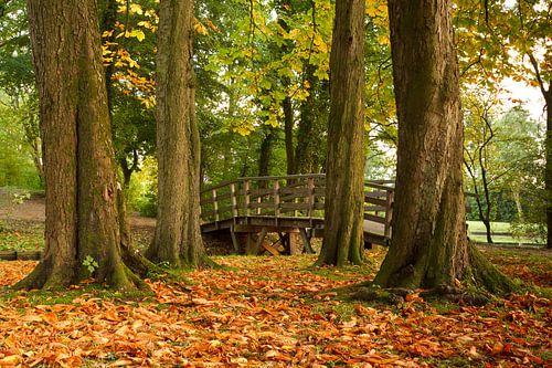 Kastanjebomen laten als eerste hun bladeren vallen van