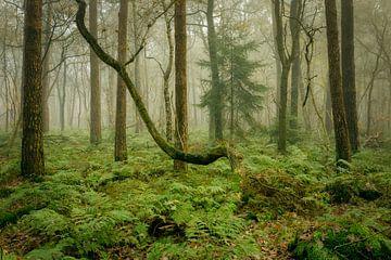 Sfeervol mistig herfstbos van Peter Bolman