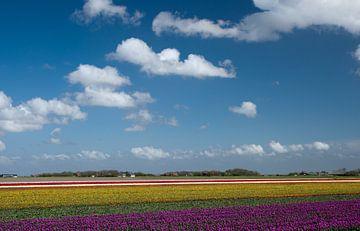 Dutch Picture von Menno Schaefer