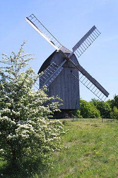 Windmühle von Karina Baumgart