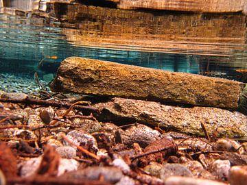 Steen onderwater von Fenneke Visscher
