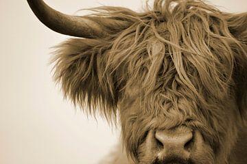 Schotse hooglander detail kop sepia van Sascha van Dam