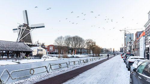 Vogels vliegen voorbij Molen de Ster in Utrecht