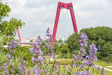 Die Willemsbrug in Rotterdam mit Lavendel und Bienen von Michèle Huge