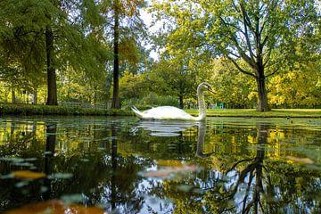 Zwaan in het park van Willian Goedhart