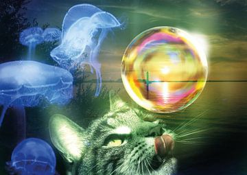 Der Traum einer Katze von Andreas Schulte