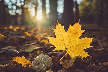 Gouden herfst - esdoornblad tegen het licht van Jonathan Schöps | UNDARSTELLBAR