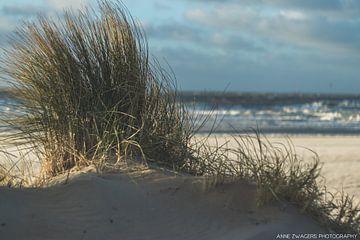 Duingras tegen achtergrond van een onstuimige Noordzee van Anne Zwagers