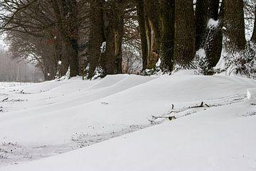 sneeuw duinen van ton vogels