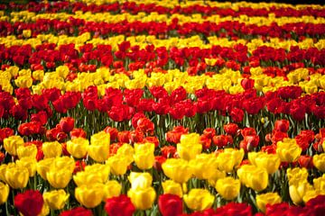 Gele en rode tulpenbed van Ad van Geffen