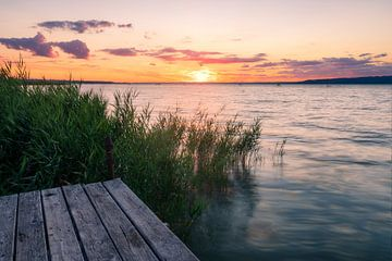 Sonnenuntergang durchs Schilf am Südufer des Plattensee Balaton