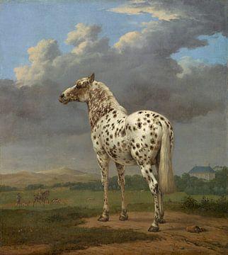 Das gescheckte Pferd, Paulus Potter