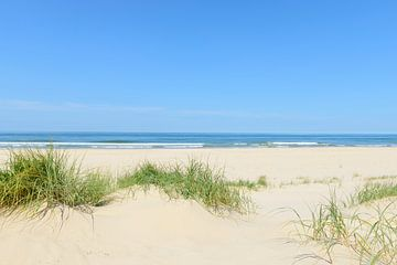 Duinen aan het strand met helmgras tijdens een mooie zomerdag van