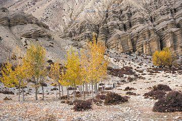 Arbres jaunes en automne dans l'Himalaya au Népal.