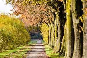 Herfst wandeling van