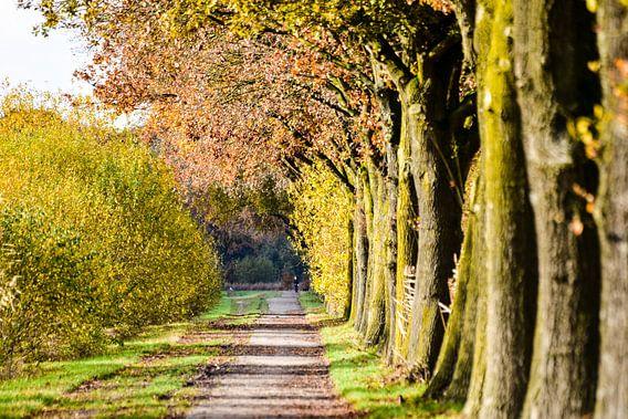 Herfst wandeling
