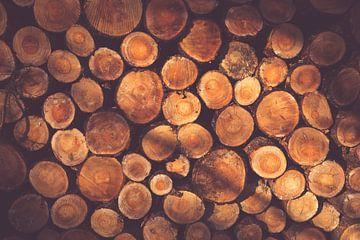Deforestation sur