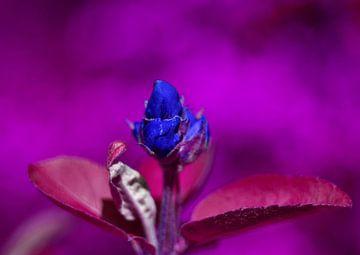 Blüte im Amethyst von Vinte3Sete