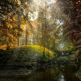 Moody Nature van Klaas Fidom