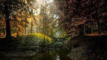 Moody Nature sur Klaas Fidom