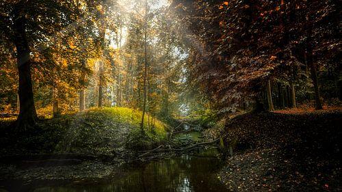 Moody Nature von