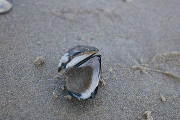 schelp in het zand
