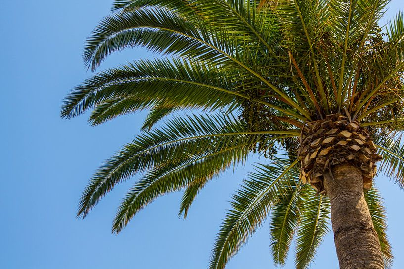 Onder de spaanse palmboom van Aiji Kley