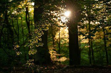 Avondlicht bladeren van Nancy van Verseveld