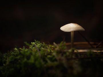 Pilz im Wald von Maikel Brands