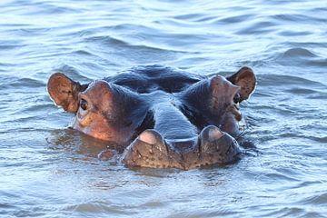 Nijlpaard loerend over het water, Saint Lucia, Zuid-Afrika von Romy Wieffer