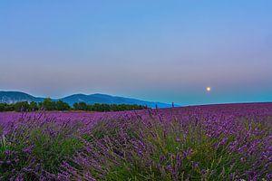 Lavender Moon II van