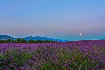 Lavender Moon II von Marcel de Groot