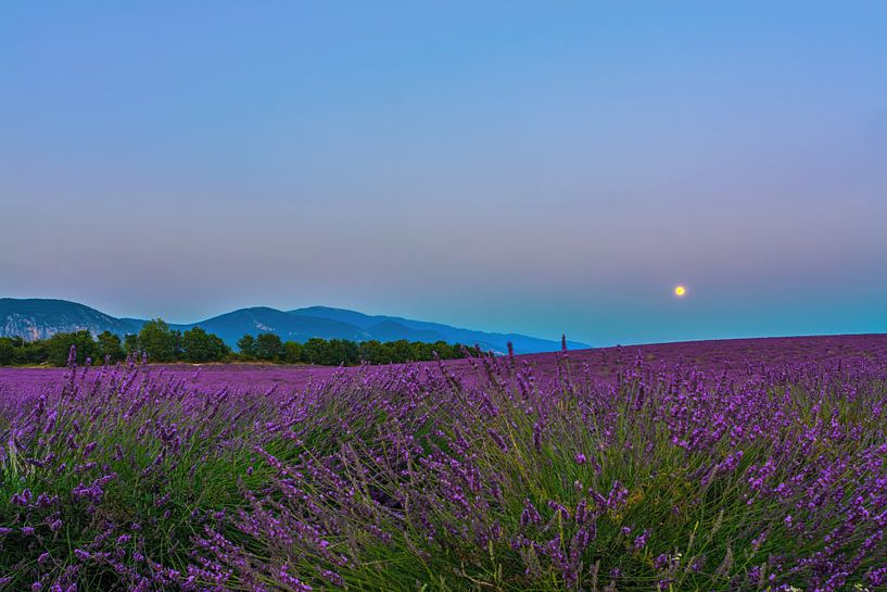 Lavender Moon II sur Marcel de Groot