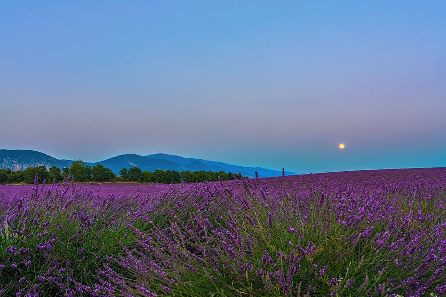 Lavender Moon II van Marcel de Groot