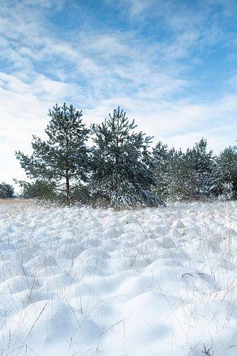 Sneeuwlandschap Kampina
